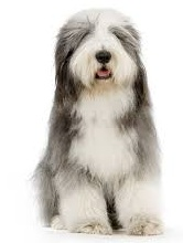 BEARDED COLLIE blade size guide