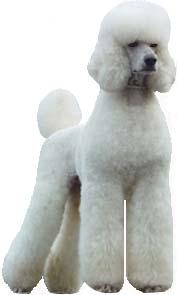 poodle clip guide